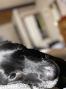 dog-03